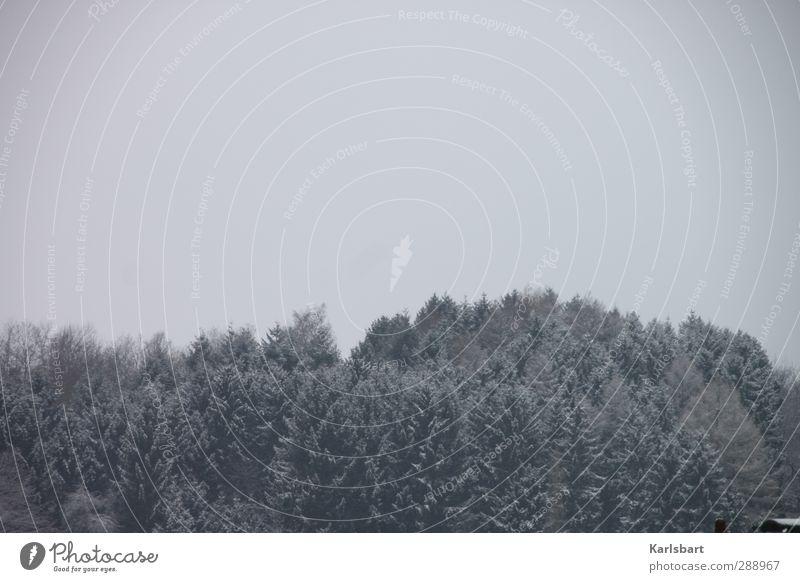 Schweigen im Walde Ferien & Urlaub & Reisen Winter Schnee Winterurlaub Landwirtschaft Forstwirtschaft Umwelt Natur Landschaft Himmel Wetter Nebel Eis Frost