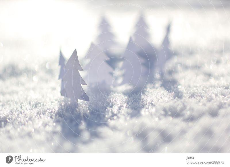 kleine weiße welt (2) Natur Landschaft Winter Schönes Wetter Schnee Baum Wald natürlich Tanne Basteln Weihnachten & Advent Papier Außenaufnahme Nahaufnahme