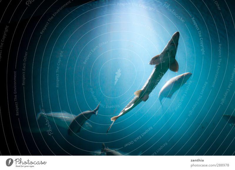 Aquarium Natur blau Ferien & Urlaub & Reisen Wasser Tier schwarz Ferne Bewegung Schwimmen & Baden Horizont Stimmung Zufriedenheit Tourismus Idylle Abenteuer