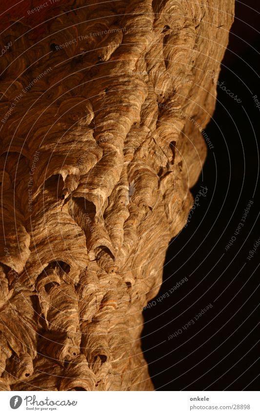 verlassene Siedlung Natur Tier Holz braun Baustelle Insekt Nest Wespen Wohnsiedlung