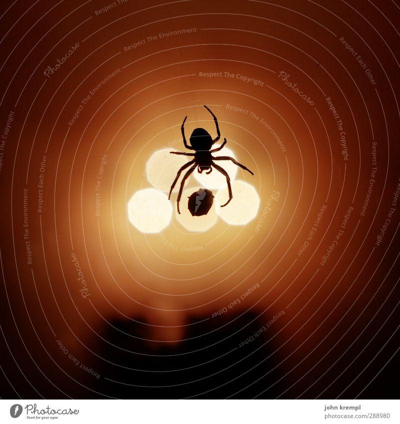 verflixt und zugewebt Natur rot Tier gelb Umwelt orange Angst leuchten bedrohlich gruselig bizarr hängen Fressen Ekel Spinne Spinnennetz