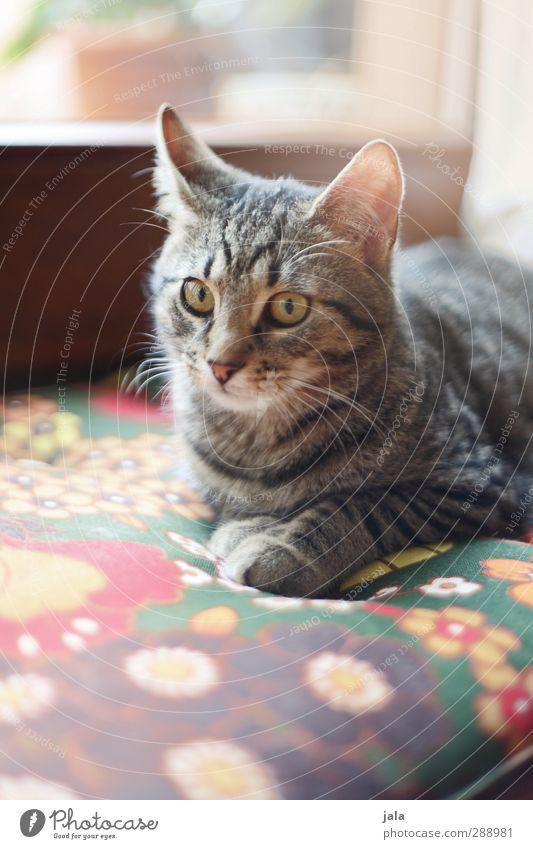 fensterplatz Katze schön Tier Erholung liegen Haustier