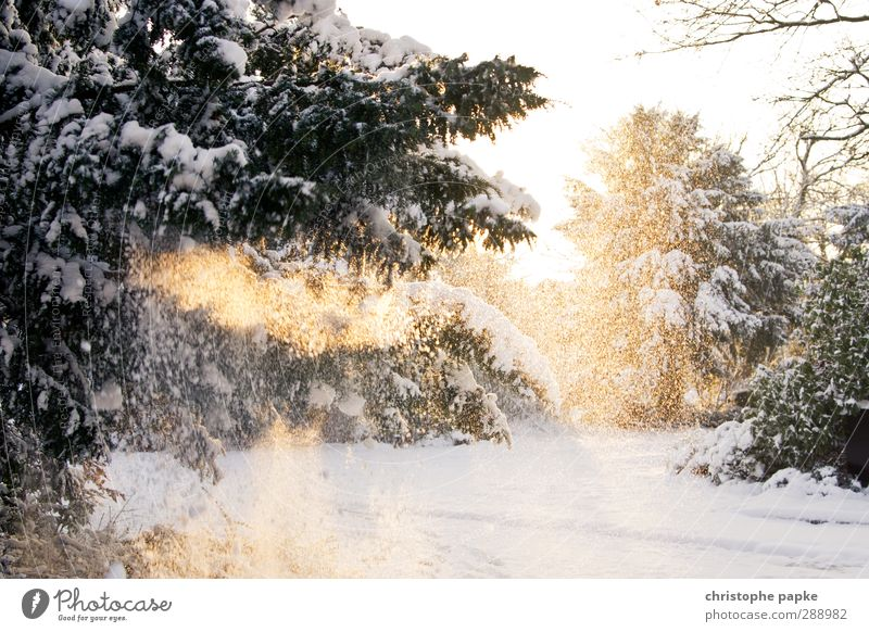 Schneezauber Natur Baum Winter kalt Umwelt Schneefall Eis Schönes Wetter Frost Tanne Winterurlaub Tannenzweig Feste & Feiern Licht