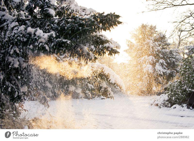 Schneezauber Winter Winterurlaub Umwelt Natur Sonnenlicht Schönes Wetter Eis Frost Schneefall Baum kalt Tanne Tannenzweig Farbfoto Außenaufnahme Menschenleer