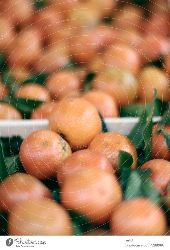 Bio Mandarinen Natur grün Blatt Herbst Gesundheit Lebensmittel orange Frucht frisch Ernährung rund Ernte lecker Bioprodukte saftig Vegetarische Ernährung
