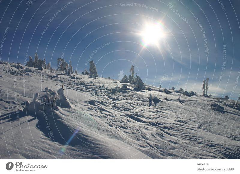 Wintersonne Schwarzwald Gegenlicht kalt Wald weiß Berge u. Gebirge Schnee Sonne Landschaft Himmel blau