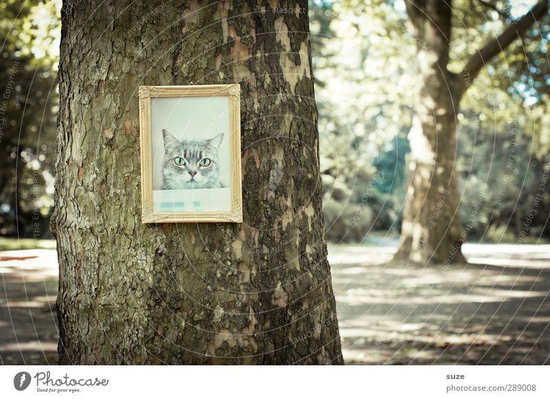 Reviermarkierung Umwelt Natur Baum Park Katze Tiergesicht hängen außergewöhnlich lustig gold Bild Baumstamm Bilderrahmen Katzenbaum edel Katzenbild Erinnerung