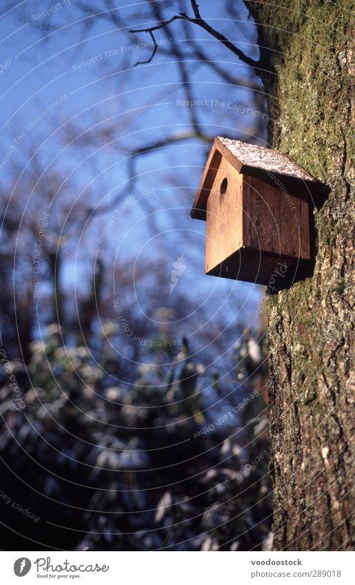 Vogelhaus aus Holz Haus Garten Eis Frost blau braun kalt Häusliches Leben Blauer Himmel Niederlassungen Kofferraum Vogelhäuschen Nistkasten nächste Box Golfloch