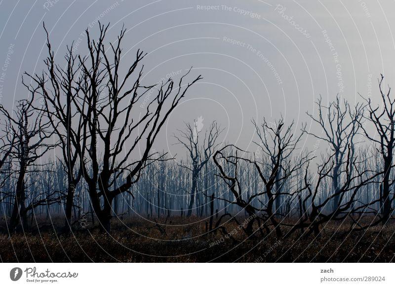 Herbst Umwelt Natur Pflanze Winter schlechtes Wetter Nebel Regen Regenwasser Baum Baumstamm Wald Holz bedrohlich dunkel blau schwarz Traurigkeit Einsamkeit