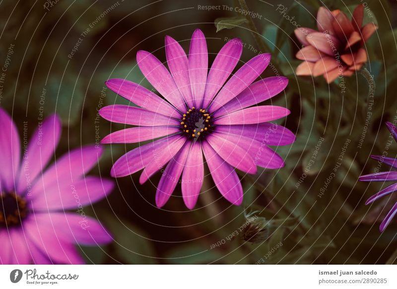 rosa Blütenpflanze im Frühjahr Blume Blütenblatt Pflanze Garten geblümt Natur Dekoration & Verzierung Romantik Beautyfotografie zerbrechlich Hintergrund neutral