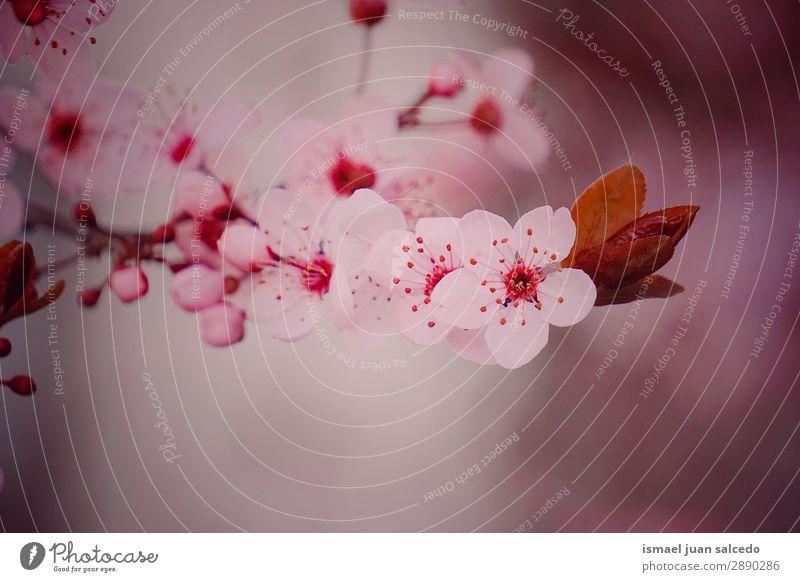 rosa Blume im Frühling Blütenblatt Pflanze Garten geblümt Natur Dekoration & Verzierung Romantik Beautyfotografie zerbrechlich Hintergrund neutral Sommer Winter