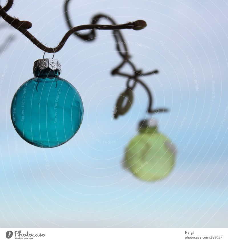 draußen... Himmel Natur Weihnachten & Advent blau Pflanze Winter gelb Umwelt kalt Schnee Garten braun Eis außergewöhnlich Glas Dekoration & Verzierung