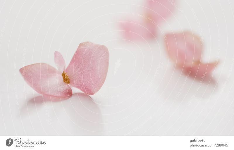 Leise Töne Natur schön weiß Farbe Blatt ruhig Erholung Erotik feminin Gefühle Blüte träumen Stimmung rosa Zufriedenheit Romantik