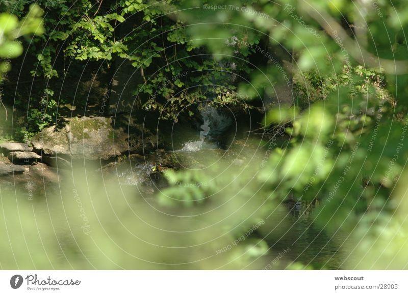 Am Fluß 1 Bach Flußmündung ruhig Sommer harmonisch Fluss