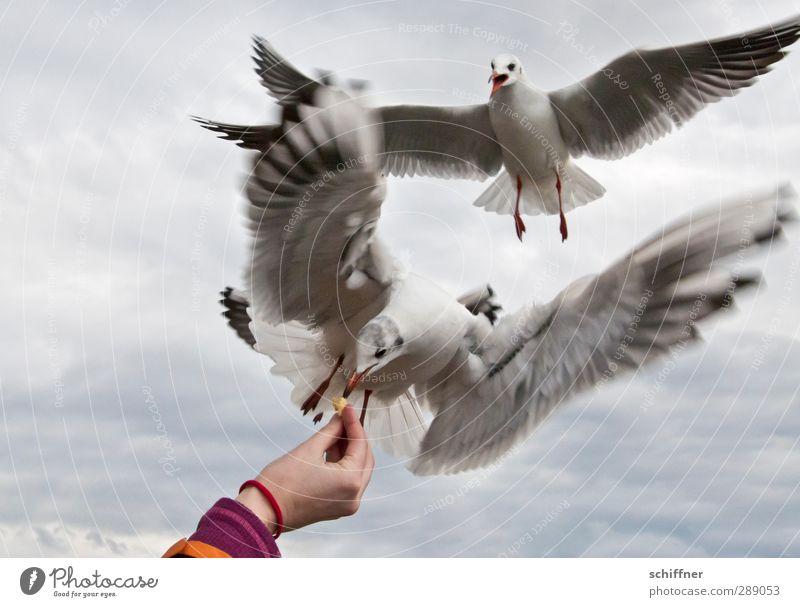 MeinsMeinsMeins! Mensch Himmel (Jenseits) Hand Wolken Tier Vogel verrückt Flügel Tiergruppe Finger Möwe Konflikt & Streit Fressen kämpfen Schwarm füttern