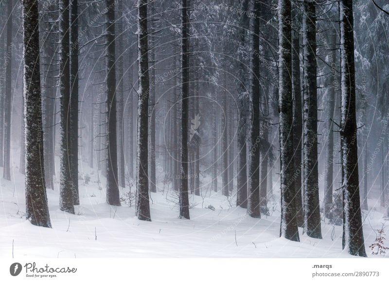 Still und starr Natur Wald Winter dunkel Umwelt kalt Schnee Stimmung Eis Nebel Wandel & Veränderung Urelemente Frost Nadelbaum Nadelwald