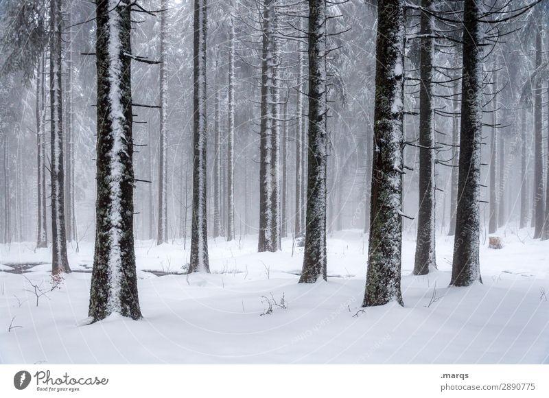 gefrorene Bäume Natur Winter Nebel Schnee Baumstamm Nadelbaum Wald dunkel kalt viele Stimmung mystisch Schwarzwald Farbfoto Außenaufnahme Menschenleer Tag