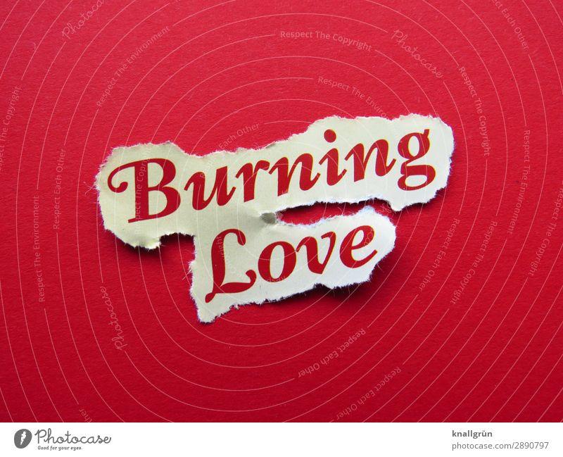 Burning Love Schriftzeichen Schilder & Markierungen Kommunizieren Zusammensein rot weiß Gefühle Glück Lebensfreude Euphorie Liebe Verliebtheit Begierde Lust Sex