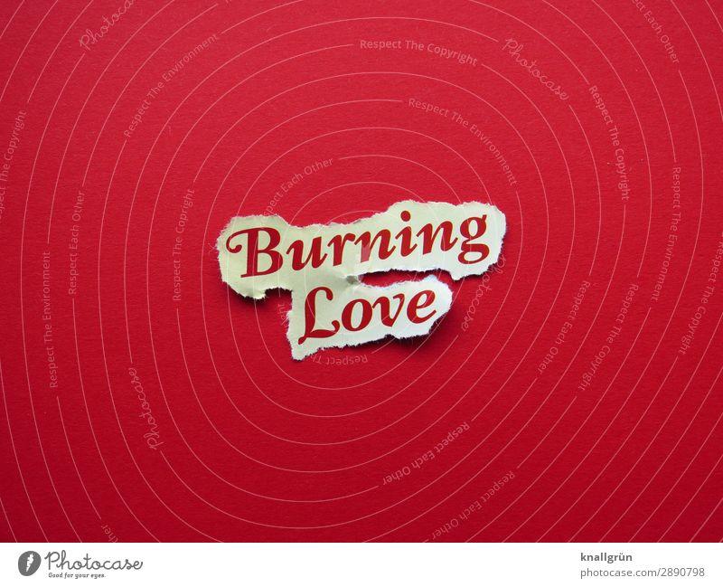 Burning Love Schriftzeichen Schilder & Markierungen Kommunizieren Liebe heiß rot türkis Gefühle Euphorie Sympathie Zusammensein Verliebtheit Begierde Lust Sex