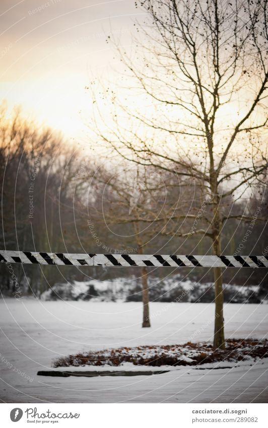 stop Stadt Baum Einsamkeit Winter Landschaft kalt Schnee Zeit Linie Beginn trist Sicherheit bedrohlich einfach Ziel Neugier