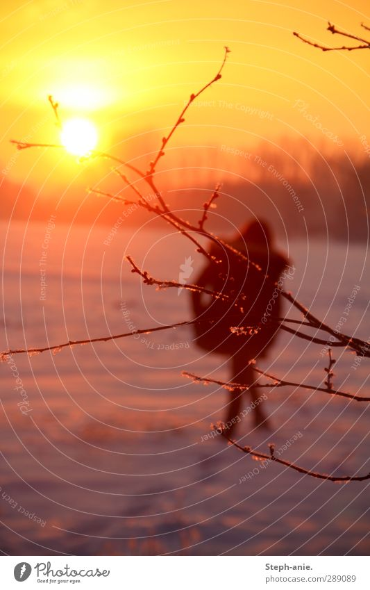 Winterfeuer Mensch Natur Sonne Einsamkeit ruhig gelb Schnee feminin träumen Eis natürlich gehen orange laufen Schönes Wetter