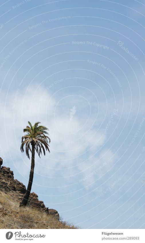 (k)eine Oase Natur Ferien & Urlaub & Reisen Sommer Pflanze Baum Tier Landschaft Ferne Umwelt Wärme Freiheit Sand Wetter Angst Erde Klima