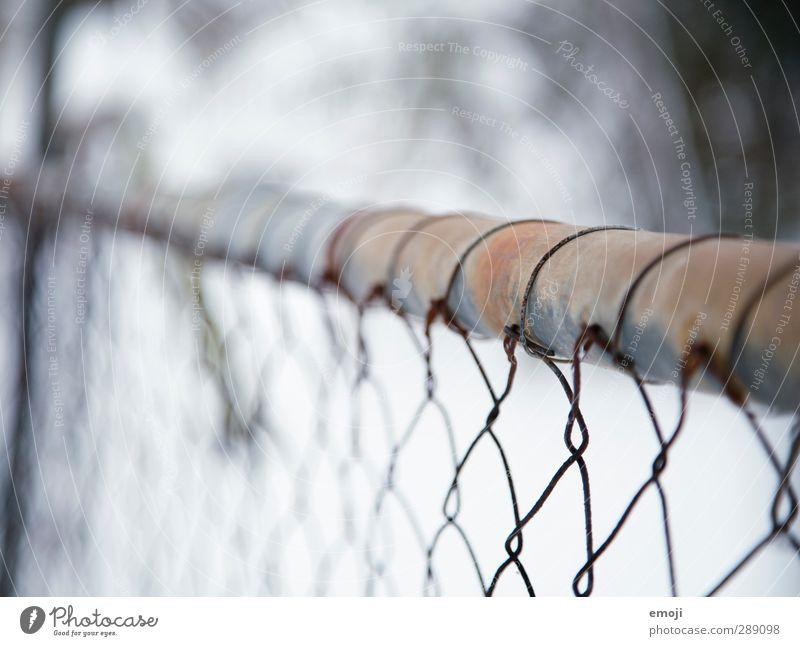 Zaun I Natur blau Winter Landschaft Umwelt kalt Schnee Metall Maschendraht Maschendrahtzaun