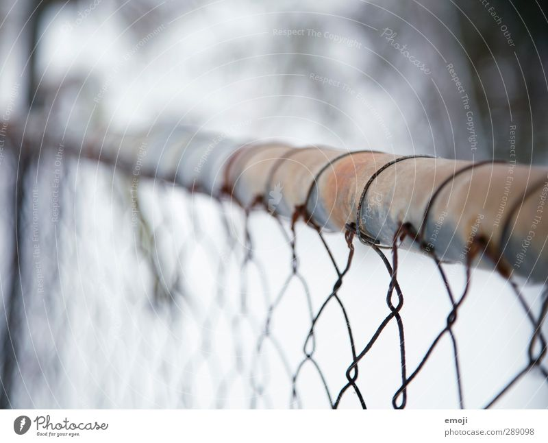 Zaun I Umwelt Natur Landschaft Winter Schnee Metall kalt blau Maschendraht Maschendrahtzaun Farbfoto Gedeckte Farben Außenaufnahme Nahaufnahme Detailaufnahme