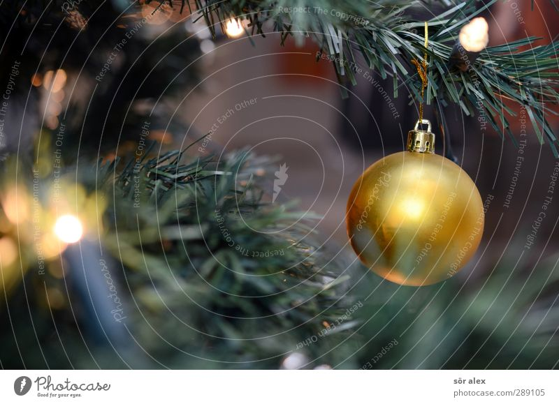 recycling-tanne Weihnachten & Advent grün Freude Gefühle Glück Feste & Feiern Stimmung Zusammensein gold glänzend Zufriedenheit Fröhlichkeit leuchten Kunststoff