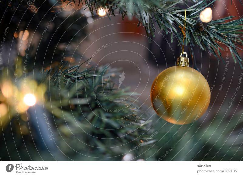 recycling-tanne Weihnachten & Advent grün Freude Gefühle Glück Feste & Feiern Stimmung Zusammensein gold glänzend Zufriedenheit Fröhlichkeit leuchten Kunststoff Kitsch Weihnachtsbaum