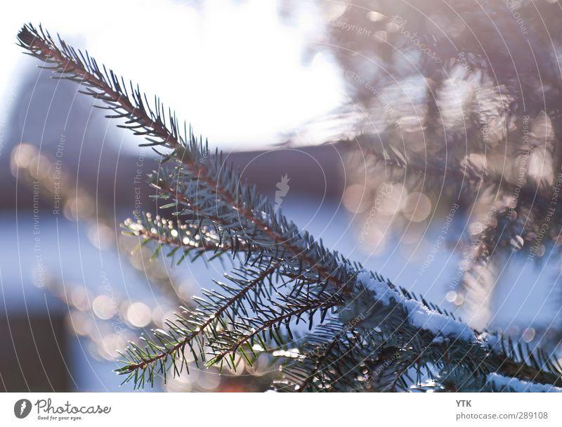 Winter's Day Umwelt Natur Pflanze Urelemente Luft Wasser Himmel Sonnenlicht Klima Klimawandel Wetter Schönes Wetter Eis Frost Schnee Baum Grünpflanze Wald