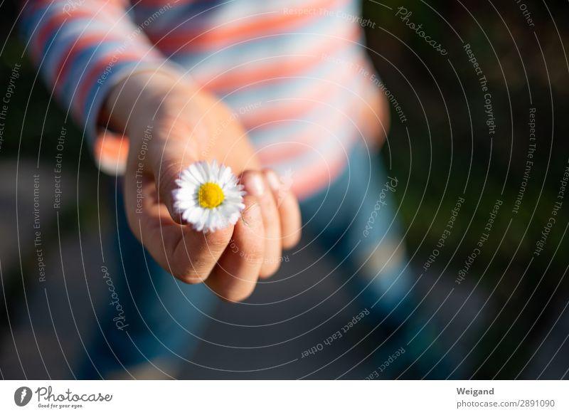 Dankeschön! Leben Meditation Kleinkind Junge Kindheit Lächeln Freundlichkeit Fröhlichkeit friedlich Güte Gastfreundschaft achtsam Wachsamkeit Verlässlichkeit