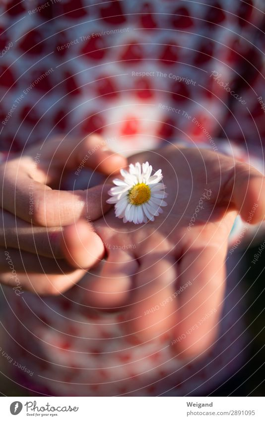 Blumenkind harmonisch Muttertag Geburtstag Taufe Kindererziehung Kindergarten Mädchen Junge Kindheit 1 Mensch 3-8 Jahre Umwelt Natur Pflanze berühren Lächeln