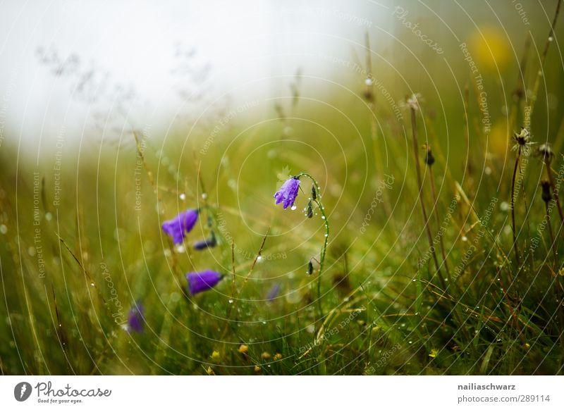 Tautropfen Natur blau grün schön Sommer Pflanze Blume Landschaft Erholung Umwelt Wiese Gras Frühling Garten natürlich Park