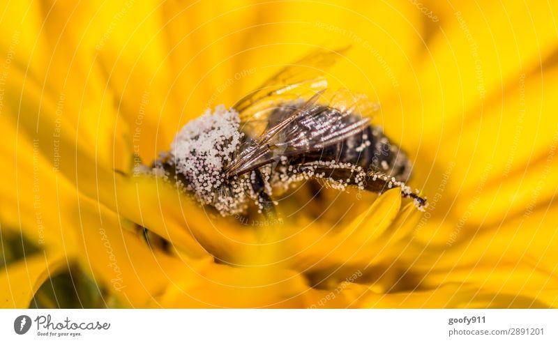 Tief drin!!! Natur Sommer Pflanze Tier Herbst Umwelt Blüte Frühling Wiese Garten Arbeit & Erwerbstätigkeit Ausflug Park Feld glänzend Wildtier