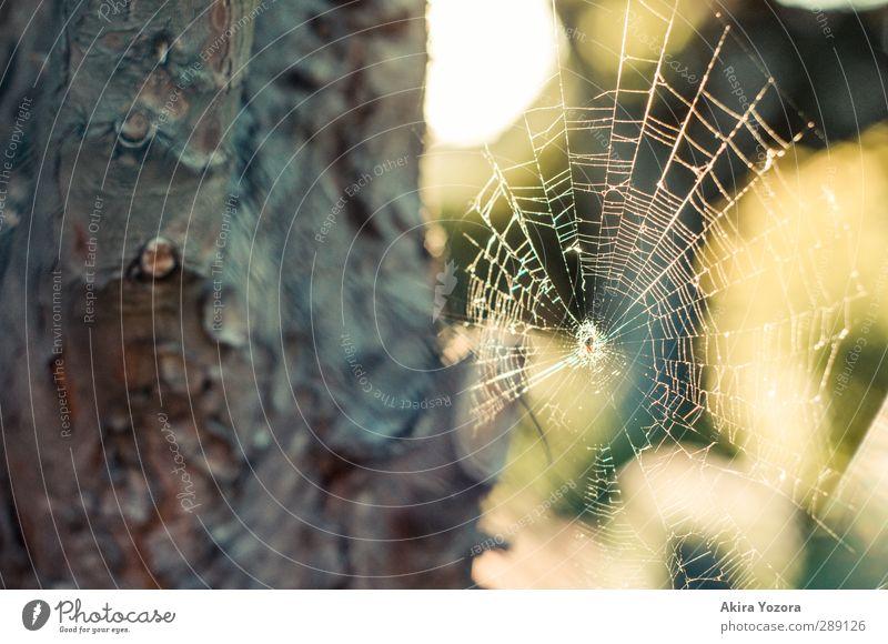 Architektur im Tierreich Baum Rinde Natur Spinne Netz grün gelb weiß braun