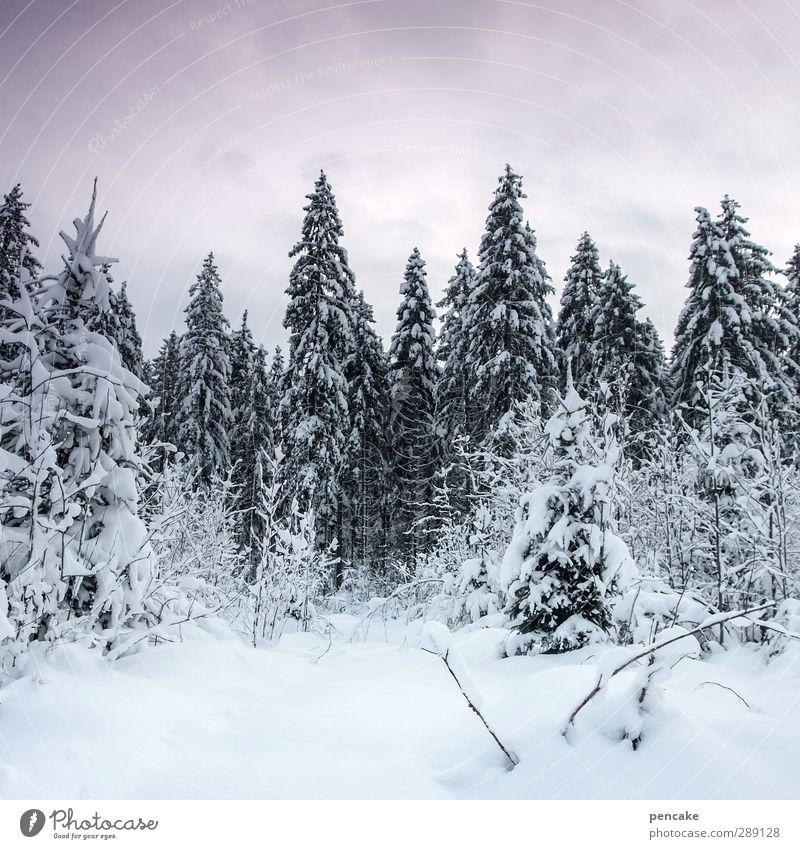 puderzucker Himmel Natur schön weiß Landschaft ruhig Winter Wald kalt Schnee Gesundheit hell Eis Klima authentisch wandern