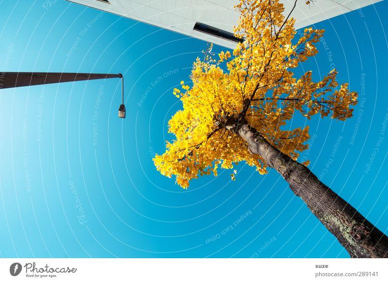 Der große Blonde Haus Arbeit & Erwerbstätigkeit Business Umwelt Himmel Wolkenloser Himmel Herbst Schönes Wetter Baum Stadt Bauwerk Gebäude Architektur Fassade