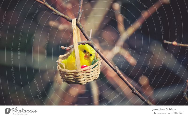 haha bald ist Ostern! Natur schön Freude lustig Glück klein Fröhlichkeit niedlich Geschenk Ast Suche Zweig finden Nest Küken