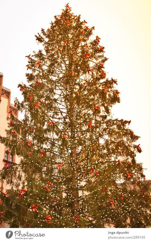 warten.... Baum Nadelbaum Weihnachtsbaum Christbaumkugel Baumschmuck Weihnachtsmarkt Weihnachten & Advent Freude Lebensfreude Vorfreude Feiertag Farbfoto
