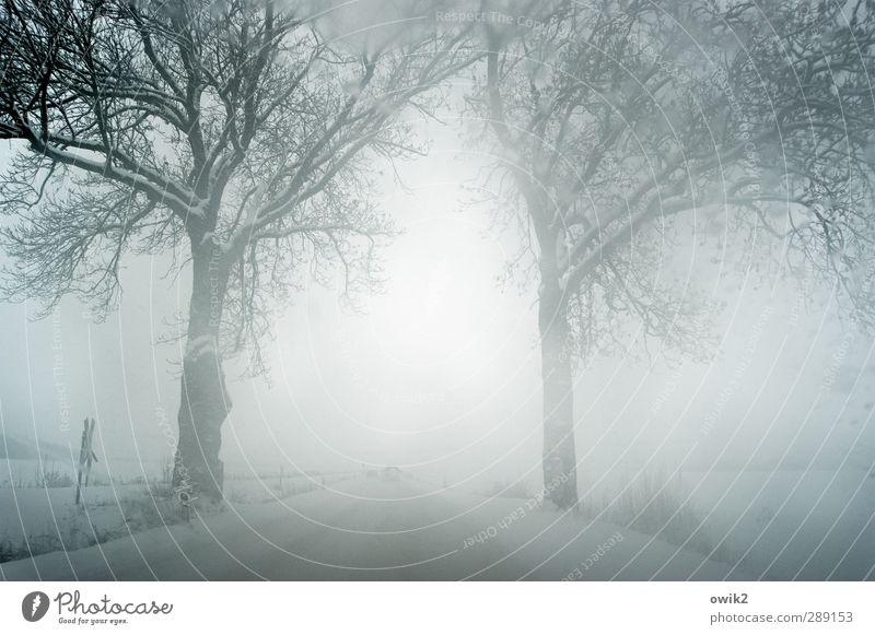 All I have to do is dream Ferien & Urlaub & Reisen Ausflug Abenteuer Ferne Freiheit Winter Schnee Umwelt Natur Landschaft Klima Schönes Wetter Eis Frost
