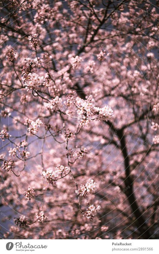 #A# KirschErwachen Kunst Kunstwerk ästhetisch Kirschblüten Frühling Frühlingsgefühle Frühlingstag Frühlingsfarbe Frühlingsfest Kirschbaum Japan Farbfoto