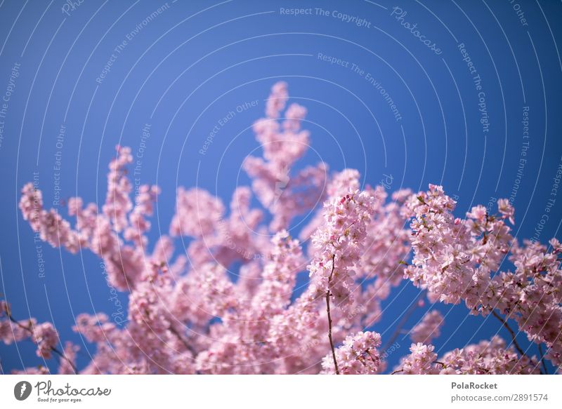 #A# Rosa Frühling Umwelt Natur Landschaft Pflanze ästhetisch Frühlingsgefühle Frühlingstag Frühlingsfarbe Frühlingsfest rosa Blühend Blühende Landschaften