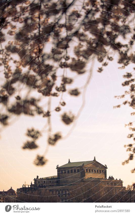 #A# Dresdner Blüte II Kunst ästhetisch Semperoper Dresden Blühend Blühende Landschaften Elbufer Kirschblüten Farbfoto Gedeckte Farben Außenaufnahme