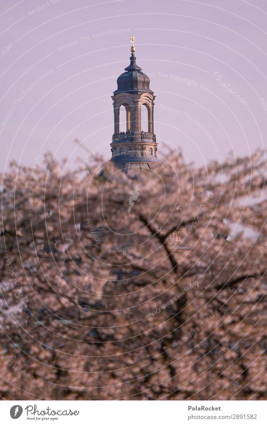 #A# Big Sister Umwelt Natur Landschaft ästhetisch Frauenkirche Dresden Kuppeldach Turm Gebäude Gebäudeteil Kirschblüten Frühling Frühlingsgefühle Frühlingstag