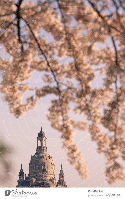 #A# Dresdner Frühling II Kunst ästhetisch Dresden Frauenkirche Frühlingsgefühle aufwachen Sachsen Blühend Blühende Landschaften Kirschblüten Idylle Farbfoto