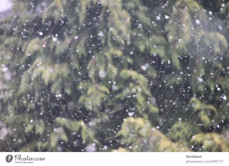 Leise rieselt der Schnee Natur Ferien & Urlaub & Reisen Baum Erholung Winter Ferne Wald Umwelt Berge u. Gebirge Bewegung Schneefall Eis Wetter Klima Tourismus