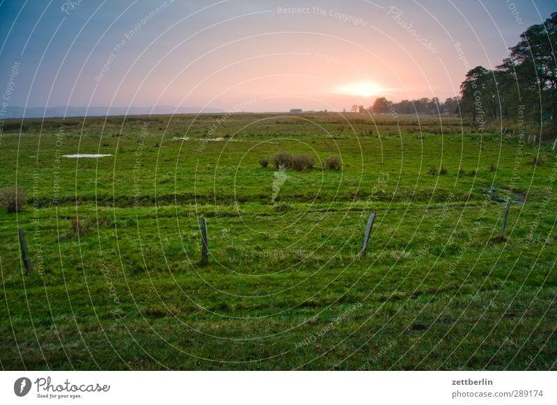 Weide Himmel Natur Sommer Pflanze ruhig Landschaft Umwelt Wiese Horizont Wetter Feld Klima Rücken Zufriedenheit Schönes Wetter Hoffnung
