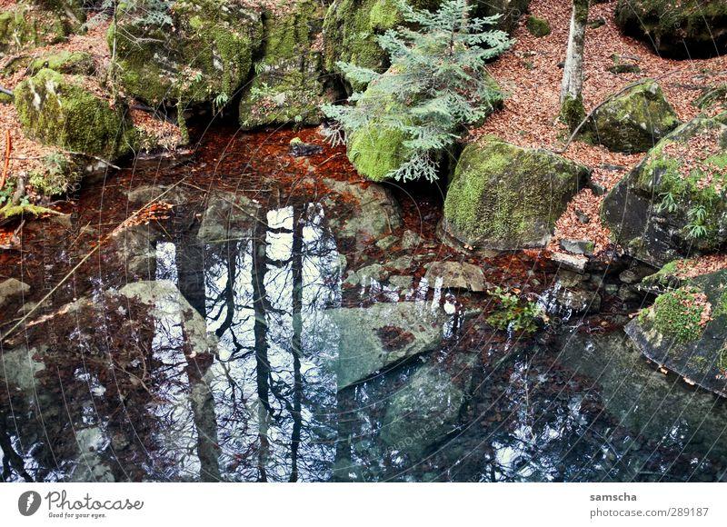 Der Spiegel im Wald wandern Umwelt Natur Landschaft Pflanze Urelemente Erde Wasser Herbst Felsen Seeufer Teich Flüssigkeit kalt nass natürlich wild Abenteuer