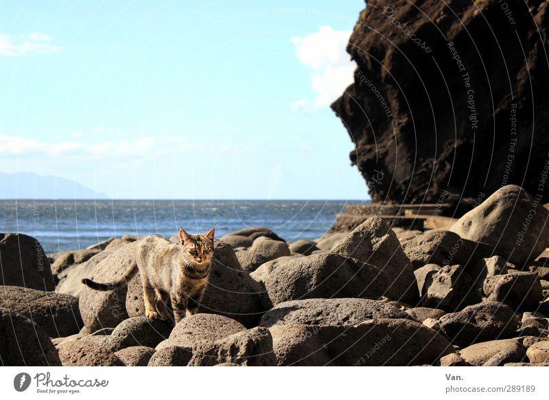 Strandmieze Ferien & Urlaub & Reisen Natur Landschaft Wasser Himmel Horizont Felsen Küste Bucht Meer Atlantik Tier Haustier Katze 1 Stein blau grau Farbfoto